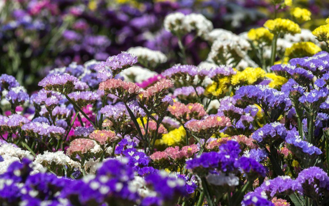 flower lot